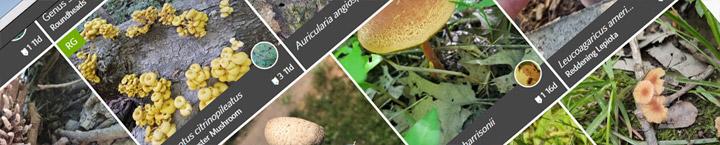 slice of iNaturalist website.
